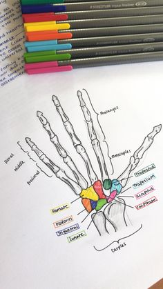Medical Student Notes Study 67 Ideas For 2019 medical is part of School study tips - Life Hacks For School, School Study Tips, Nursing School Notes, Medical School, Medical College, Medical Students, Nursing Students, Medical Anatomy, Student Studying