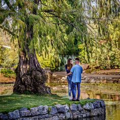 I like this tree in Botanic gardens Secret Garden Colouring, Colorful Garden, Miniature Fairy Gardens, Amazing Gardens, Botanical Gardens, Outdoor Gardens, Planting Flowers, Modern, Rocks Garden