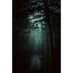 Down the path.... #niklasborstingphotography #mindfulness #forest #path #life #canon #600D #50mm #manfrotto #setlife #lightroom #nature #autumn #beautifulnature #sothin #pine #allthingsgreen #mist #fog