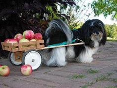 ¡Cambiemos el carrito de los helados por otro un tanto más sano!