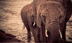 Wildlife firm secures more land in Kenya to protect elephants