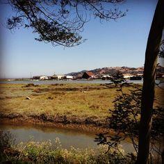 Those endless lazy summer days. Larkspur - Marine country, San Francisco, CA