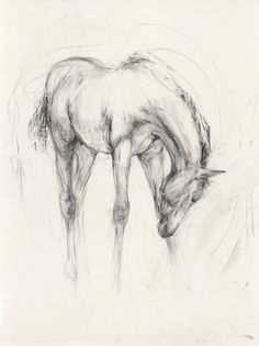Equestrian art, bull paintings, modern abstract originals and prints for sale. Limited edition giclee prints and originals of horses and bulls in mixed media. Horse Drawings, Pencil Art Drawings, Animal Drawings, Animal Sketches, Art Sketches, Bull Painting, Horse Sketch, Horse Illustration, Watercolor Horse