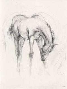 Lydia Kiernan Horse Drawings, Art Drawings Sketches, Animal Drawings, Pencil Drawings, Bull Painting, Painting & Drawing, A Level Art Sketchbook, Horse Sketch, Horse Illustration