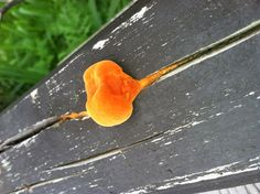 Orange fungal growth on wooden rail