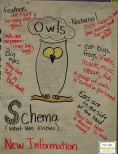 Owl-Mazing Week - Mrs. Wills Kindergarten