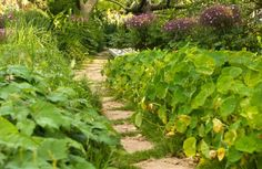 Green and glorious garden path