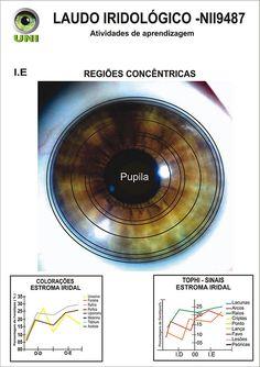 Blog de cursoiridologia : IRIDOLOGIA - CURSO DE IRIDOLOGIA A DISTÂNCIA, MODELO DO LAUDO IRIDOLÓGICO - REGIÕES CONCÊNTRICAS
