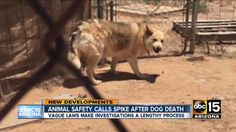 Owner negligence is deadly for pets in Maricopa County, Arizona, where temperatures reach up to 120 degrees in the summer. Unfortunately, the minimum  standard of care for animals within the county is extremely low and consequently animals are suffering. Significant changes need to be made immediately....