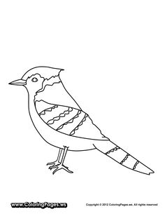 Bird Coloring Page Eurasian Jay from Echo's Bird Field