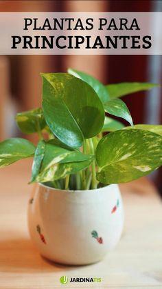 Types Of Succulents Plants, Planting Succulents, Indoor Garden, Indoor Plants, Cement Flower Pots, All About Plants, Pothos Plant, Garden Styles, Plant Decor