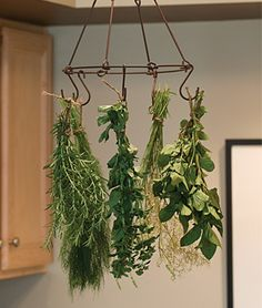 Herb  Flower Drying Rack Kit - All Gardening Supplies at Burpee.com.  This rack can also be found at www.gardners.com