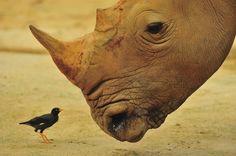 Mosambik - Südafrika Nashorn Safari