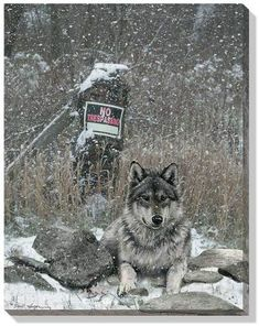 "David Wenzel Open Edition Wrapped Canvas:""No Trespassing – Wolf"" Wolf Spirit, Spirit Animal, Lone Wolf Quotes, Beautiful Wolves, Feather Painting, Big Bad Wolf, Wild Creatures, Guide Dog, Paisajes"