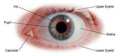 Improve Eyesight By Doing Simple Eye Exercises