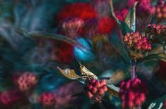 Fairytale Macro World by Polish Photographer Magda Wasiczek | Bored Panda