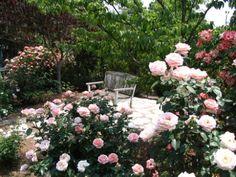 Rose Garden Bench -