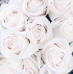 Ideas For Flowers Photography Wallpaper Backgrounds Floral Amazing Flowers, Flowers In Hair, Colorful Flowers, White Flowers, Beautiful Flowers, Summer Flowers, Cut Flowers, Dried Flowers, Rose Wallpaper