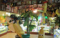 (MECCA, CA) International Banana Museum #indoor #museums #somenut
