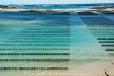 freshwater mussel farm - Google-søgning