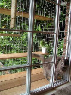 Cátio de janela para manter seguros  os gatinhos de apartamento