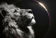 Eclipse Solar en Leo , El Rugido del León – Era Dorada