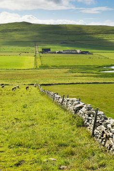 Google Image Result for http://www.visitorkney.com/images/galleries/westray/farmland,westray.jpg
