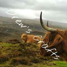 Hey, I found this really awesome Etsy listing at https://www.etsy.com/uk/listing/257446876/canvas-highland-cow-scotland-art-nature