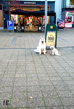 Un câine mic și unul mare Sunt dar, identici în culoare. Doge, Beast, Friends, Animals, Amigos, Animales, Animaux, Animal, Animais