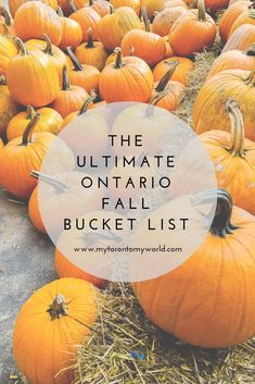 The Ultimate Ontario Fall Bucket List with a huge list of things to do in Ontario this fall Ontario Travel, Ontario Camping, Canada Destinations, Vacation Destinations, Stuff To Do, Things To Do, Canadian Travel, Best Travel Quotes, Autumn Activities