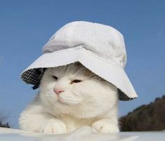 The cute white hat and the cuddly white cat 😎enjoy your weekend! Animals And Pets, Baby Animals, Funny Animals, Cute Animals, I Love Cats, Cool Cats, Kittens Cutest, Cats And Kittens, Cats In Hats