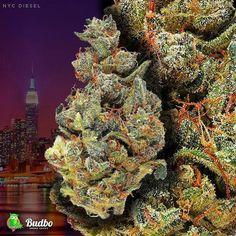 Weed Plants, Bongs, Trippy, Pipes, Hemp, Cannabis, Diesel, Graffiti, Gaming