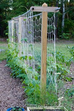This looks relatively simple and affordable. If it wider you could plant tomatoes in the middle - they could be protected agains the southern heat. - Photo of a vertical garden loosely based on Derek Fell's book Garden Trellis, Herb Garden, Garden Art, Bean Trellis, Balcony Garden, Pole Beans Trellis, Tomato Trellis, Garden Netting, Garden Drawing