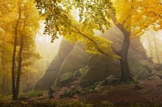 Autumn forest by Daniel Řeřicha on Ore Mountains Autumn Tale, Autumn Forest, Dark Forest, Landscape Photos, Landscape Photography, Landscape Design, Photography Ideas, All Falls Down, My Fantasy World
