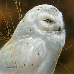 white owl by Rebecca Latham Cross Paintings, Animal Paintings, Eagle Animals, Owl Artwork, Owl Pictures, Snowy Owl, Wildlife Art, Bird Art, Beautiful Birds