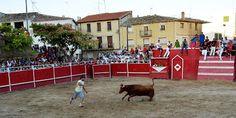 Santacara: Vacas de Jose Arriazu - Fiestas de Santacara Goats, Cow, Animals, Cows, Fiestas, Animaux, Animal, Animales, Goat