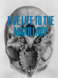 Live life to the Maxillary #dentalhumor #quote #inspire Brevard Pediatric Dental Associates | #MerrittIsland | #FL | http://www.brevardpediatricdental.com/