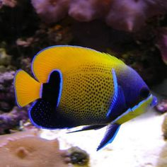 959 best latest products available images in 2019 aquarium