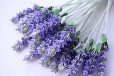 Lavender, Always At