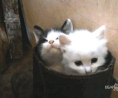 Доброе утро, котаны — somethin'gif