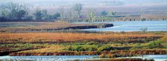 Horicon Marsh - largest freshwater cattail marsh in US -  migrating ducks and Canadian geese seen here in large numbers during fall migration