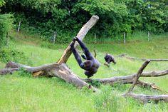 Z wizytą w duńskim safari zoo Givskud The Zoo, Garden Sculpture, Safari, Outdoor Decor
