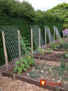 idea for squash, zucchini, cucumbers … – Plants and small vegetable garden – – diy garden landscaping Backyard Vegetable Gardens, Veg Garden, Garden Trellis, Edible Garden, Outdoor Gardens, Summer Garden, Diy Trellis, Bean Trellis, Fenced Garden