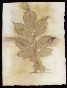 eco-print rose on paper