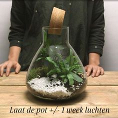 Would you like to produce a plant terrarium yourself? Tree Frog Terrarium, Terrariums Diy, Fish Tank Terrarium, Wall Terrarium, Orchid Terrarium, Terrarium Centerpiece, Terrarium Wedding, Mini Terrarium, Hanging Terrarium