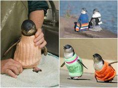 Suéteres para pingüinos (: