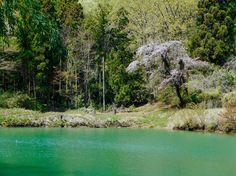 """Motohiro Oomori on Instagram: """"桜のある池。"""""""