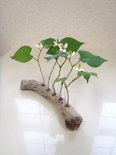 穴を開けて植物を飾る。それだけでとても素敵なインテリアに。