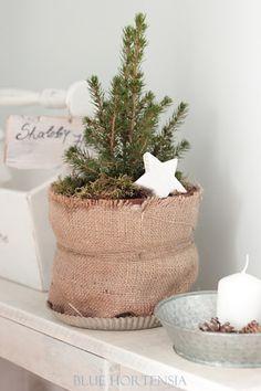 Blue Hortensia: Odbrojavanje do Božića...