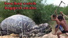 Two Boys Catch Snake In The Hole By Digging | How to Dig & Catch Snake n...